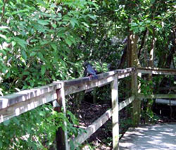 grand bahama island attractions