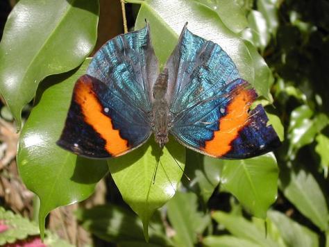 oranjestad butterfly farm