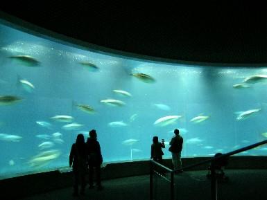 tokyo-sea-life-park