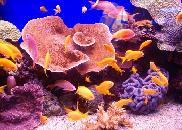 underwater observatory marin park eilat